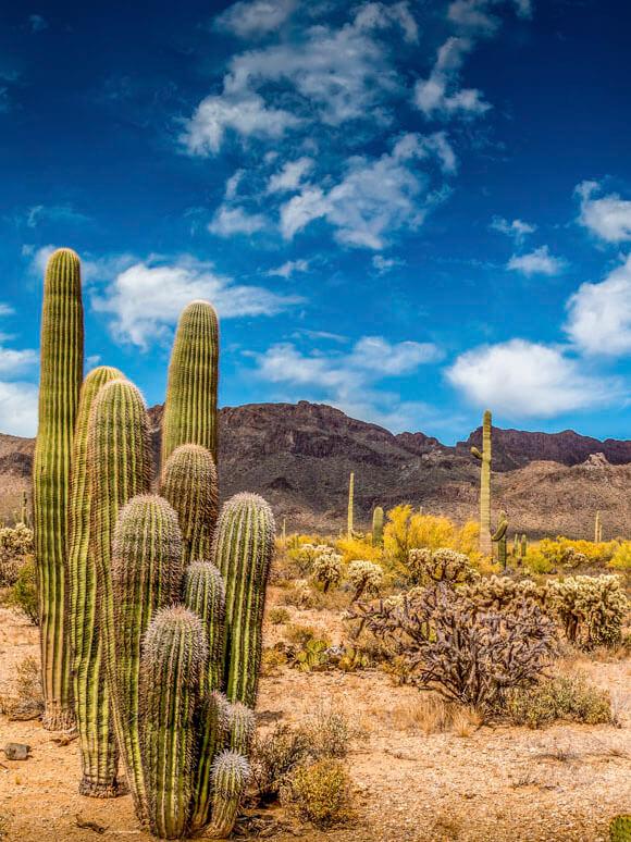 Mesa, AZ landscape